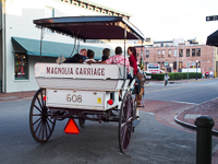 Magnolia Carriage Tours in Savannah GA.