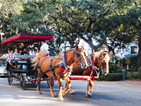 Plantation Carriage Company in Savannah GA.