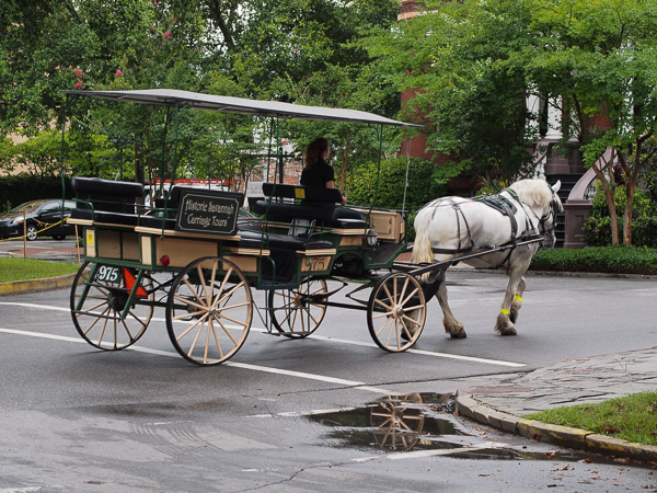 Fun Things To Do In Savannah Ga Savannah Carriage Tours